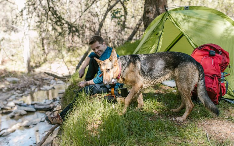 Camping with an Anxious Dog