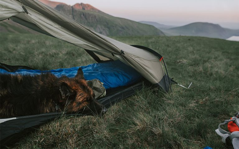 Can I Leave my Dog Alone in the Tent While Camping?